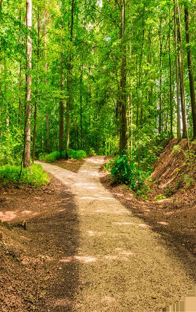 Der natürliche Weg mit Homöopathie